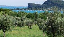 Italie - Gardameer - olijfgaarden
